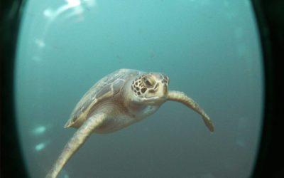 Ma prise de conscience lors d'une plongée aux Galapagos